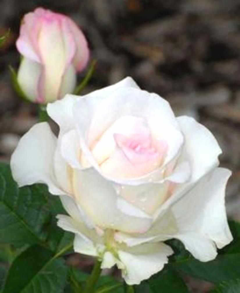 Guarigione Angelica delle Relazioni: la Pulizia del GiardinoAffettivo